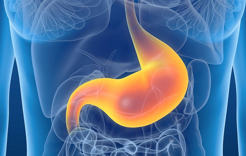 Need to Know About Worms in Your Stomach